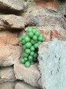 ghoreh unripe grape bricks | Persian food blog