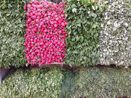 radishes and green herbs in Shiraz Iran