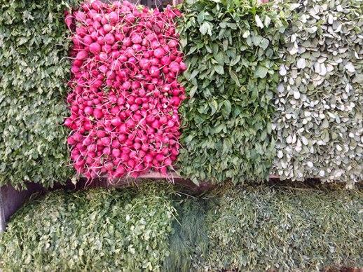radishes and green herbs in Shiraz Iran