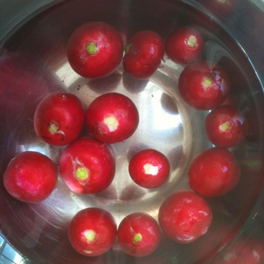 trimmed radishes (torobche) soaking in cold water | FigandQuince.com (Persian cooking and culture blog)