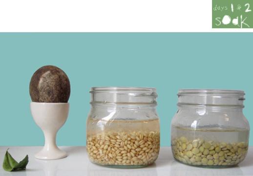 05-soak-sabzeh-wheatgrass-grow-how-to-lentil-wheat-ghandom-norooz-easter-tutorial-guide