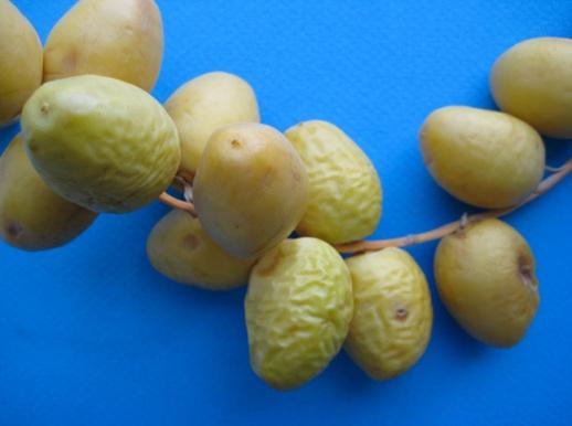 4-young-fresh-dates-khorma-Persian-blog