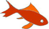 Goldfish norooz illustration icon graphic persian new year by Fig & Quince (Iranian food culture blog)