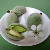 Chaghaleh Badoom - Fresh Spring Almond