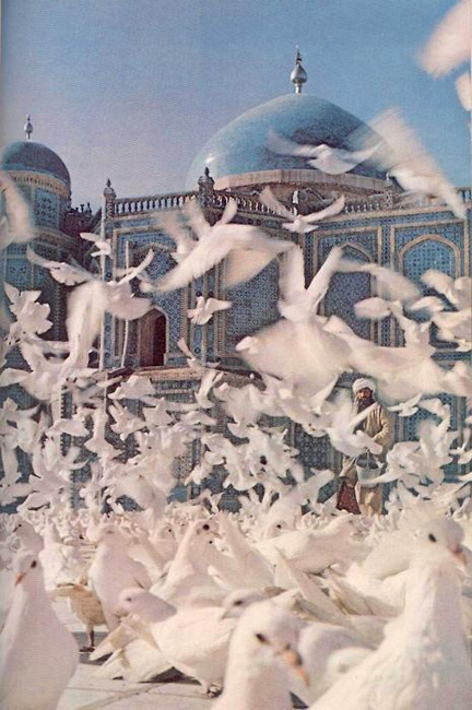 Doves in front of a blue domed mosque are fed dooneh.  Tabriz | Iran