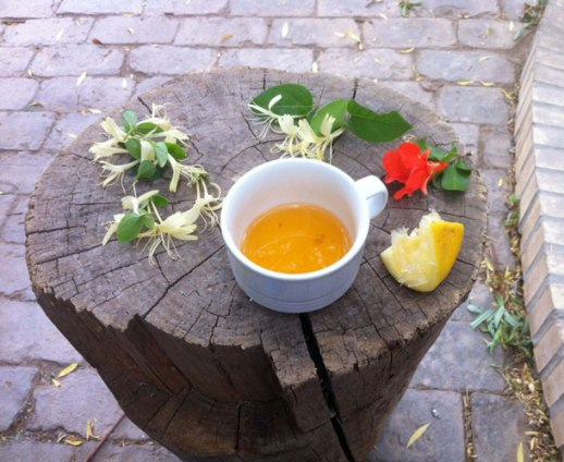 Lemon tea & honeysuckles in a garden in Yazd, Iran