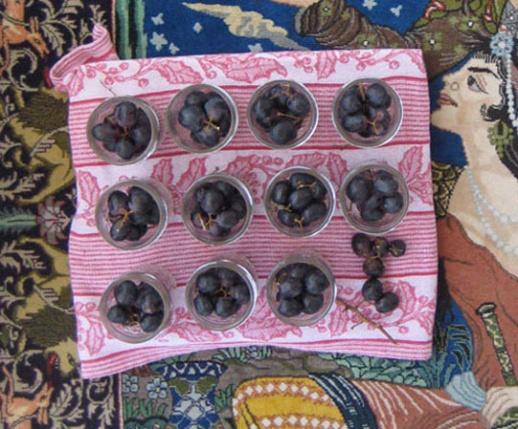 Grape pickle Persian torshi jars recipe food blog Persian rug Iranian