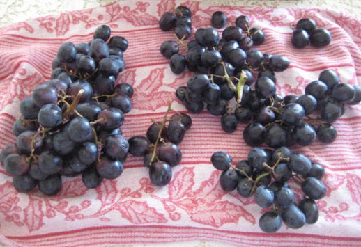 Grapes drying on cloth grape pickle recipe  Persian angur torshi