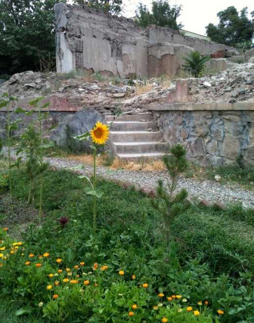 Sunflower & buttercups next to ruins | Kabul, Afghanistan | Photo by Fig & Quince (Persian food culture blog)