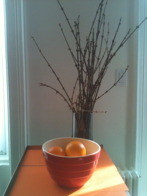 bowl of oranges, pussy willow branches stil life blue wall orange background |@FigandQuince (Persian food culture blog)
