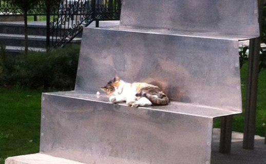 Cute Persian cat napping on sculpture in Bagh e Mouzeh ye honar (Iranian Art Museum Garden) in Tehran, Iran