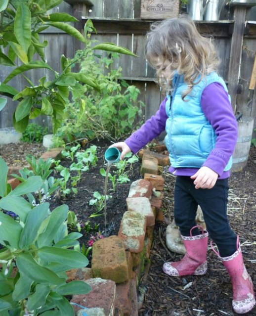a cute little girl watering planted herbs in a garden posted by Fig & quince (Iranian food blog)