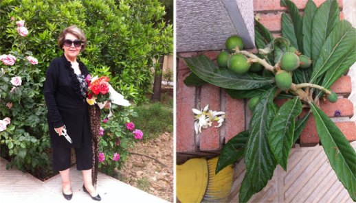 Graden in Shiraz, Iran with blooms and loquat fruit | @FigandQuince (Persian food culture blog)