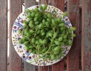 غوره و آب غوره plate of unripe grapes on decorative plate place on wooden background