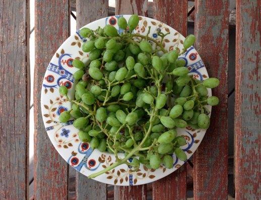 غوره و آب غوره plate of unripe grapes on decorative plate place on wooden background
