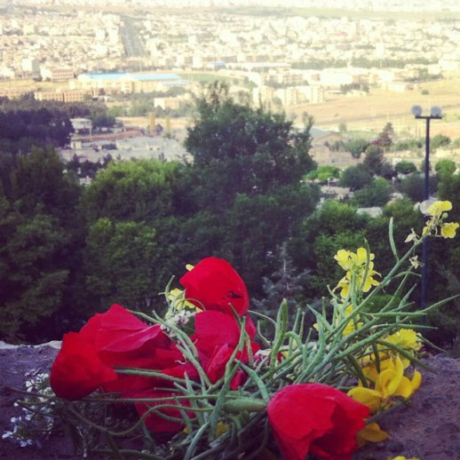 Poppies buttercups and Kermanshah - viewed from Taghbostan mountains. iran, 2014