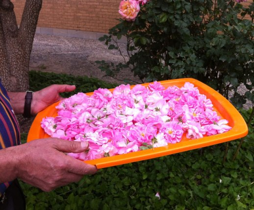 Tray filled w pink Persian rose petals, Kermanshah, Iran | My Epic Trip to Iran 2014 @figandQuince