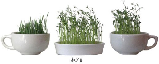 toy shovels DIY how ot grow sabzeh for norooz pictorial guide | photo by Fig & Quince (Persian food culture blog)