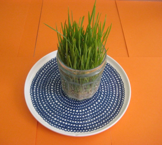 15sabzeh-how-grow-DIY-sprouting-seeds-Norooz-pictorial-guide