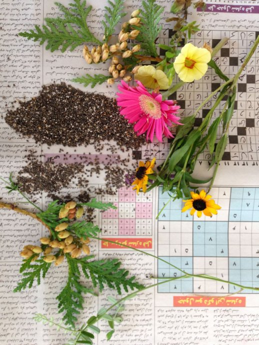 chia seeds flower & Persian newspaper still life | @figandquince (Persian food culture blog)