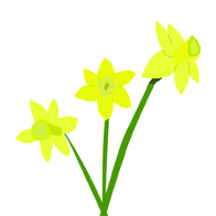 yellow daffodile drawing illustration